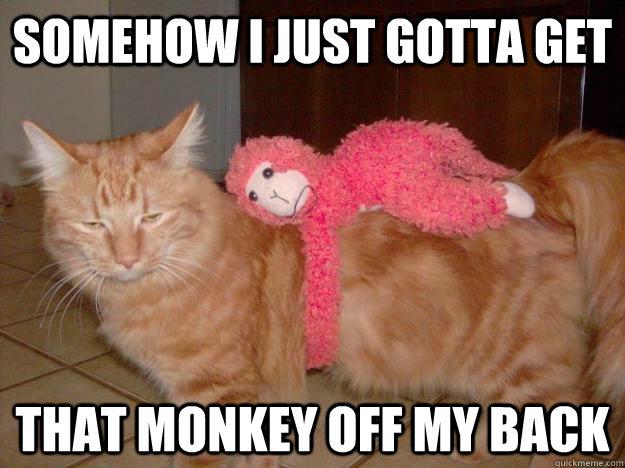 Image result for monkey off back gif