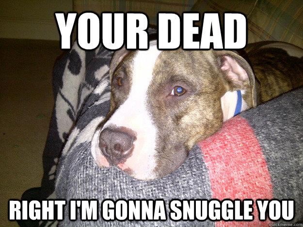 Snuggle Bear snugglebear  Instagram photos and videos