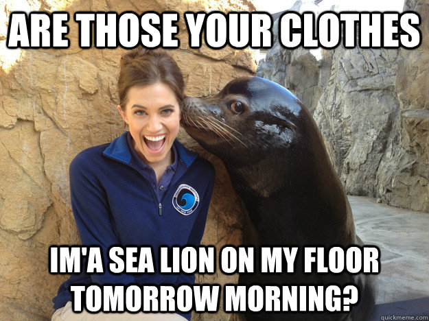 are those your clothes im'a sea lion on my floor tomorrow morning? - are those your clothes im'a sea lion on my floor tomorrow morning?  Crazy Secret
