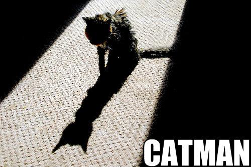 catman  Catman