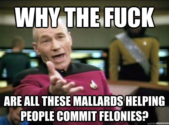 why the fuck are all these mallards helping people commit felonies?   - why the fuck are all these mallards helping people commit felonies?    Annoyed Picard HD