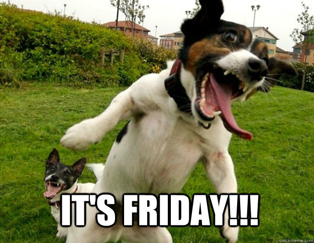 IT's Friday!!! - insane dog - quickmeme
