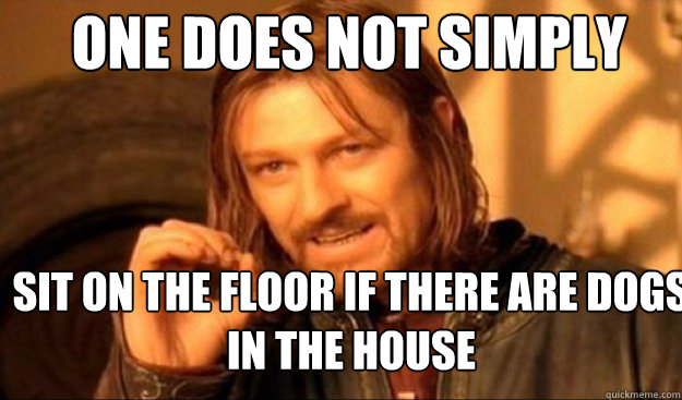 One does not simply Sit on the floor if there are dogs in the house