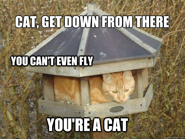 CAT, GET DOWN FROM THERE you can't even fly You're a cat - CAT, GET DOWN FROM THERE you can't even fly You're a cat  Misc