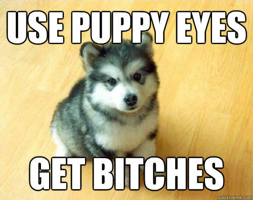 Use puppy eyes get bitches