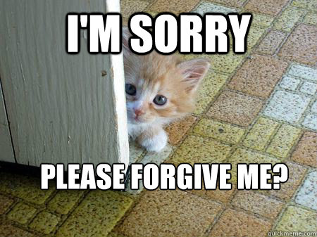 I'm sorry Please forgive me?  Sorry Cat