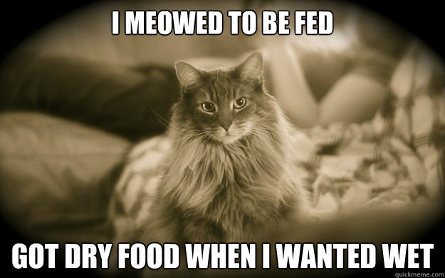 I meowed to be fed   got dry food when I wanted wet - I meowed to be fed   got dry food when I wanted wet  First World Issues