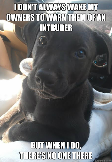 I don't always wake my owners to warn them of an intruder But when I do,  there's no one there