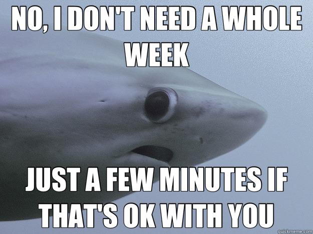 NO, I DON'T NEED A WHOLE WEEK JUST A FEW MINUTES IF THAT'S OK WITH YOU - NO, I DON'T NEED A WHOLE WEEK JUST A FEW MINUTES IF THAT'S OK WITH YOU  Scaredy Shark