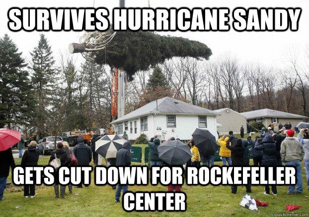 Survives Hurricane Sandy Gets cut down for Rockefeller Center ...