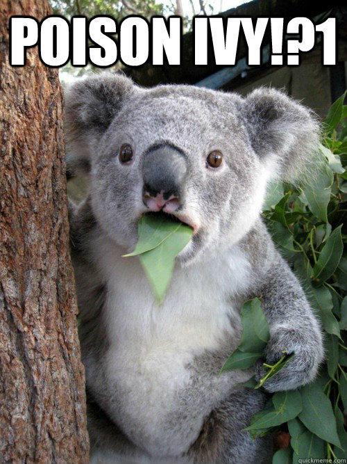 Poison ivy!?1  koala bear
