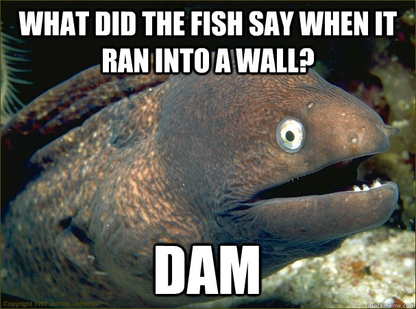 What did the fish say when it ran into a wall? Dam - What did the fish say when it ran into a wall? Dam  Bad Joke Eel