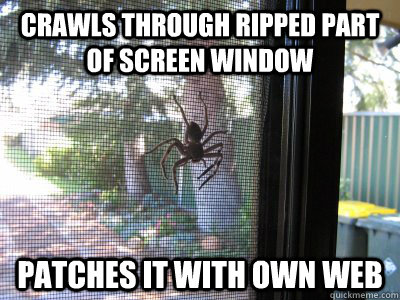 crawls through ripped part of screen window patches it with own web - crawls through ripped part of screen window patches it with own web  Misc