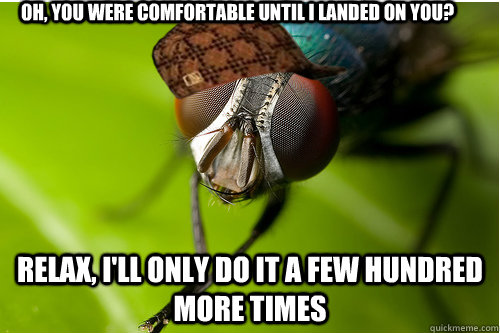 oh, you were comfortable until i landed on you? relax, i'll only do it a few hundred more times - oh, you were comfortable until i landed on you? relax, i'll only do it a few hundred more times  Scumbag Fly