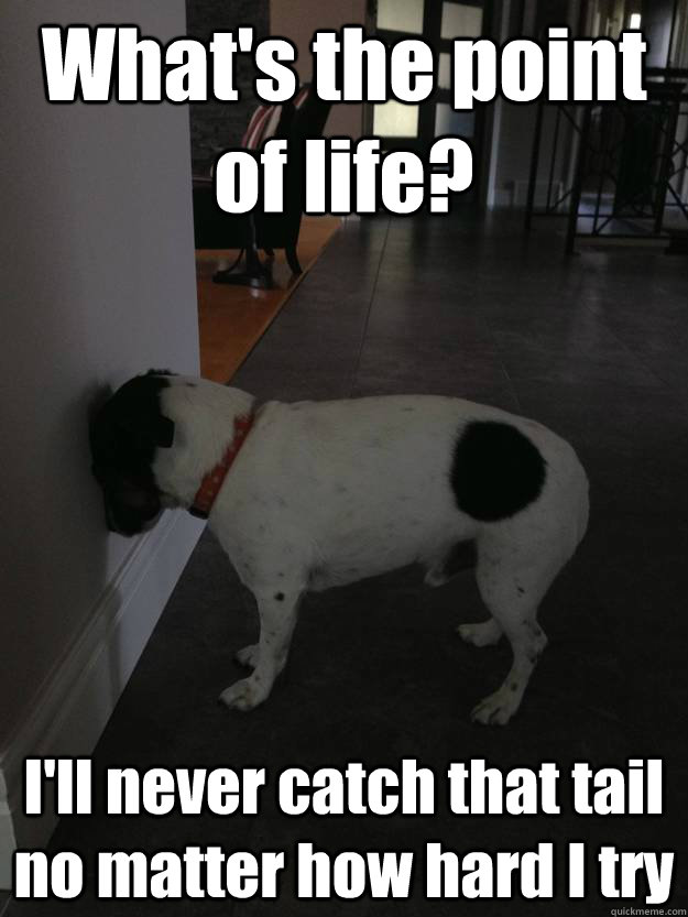 What's the point of life? I'll never catch that tail no matter how hard I try