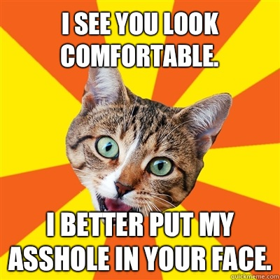 I see you look comfortable. I better put my asshole in your face. - I see you look comfortable. I better put my asshole in your face.  Bad Advice Cat