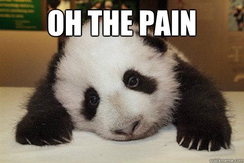 3369f8be8f302382586e9f6d08a7b55990ccf6f55dbf3967669588d173b58397 oh the pain pain panda quickmeme