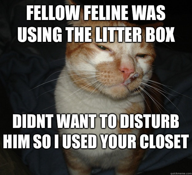 Fellow feline was using the litter box Didnt want to disturb him So i used your closet  - Fellow feline was using the litter box Didnt want to disturb him So i used your closet   Cool Cat Craig