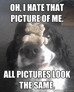 Oh, I hate that picture of me. All pictures look the same.  No Self-esteem Excellently Trained Cockerspaniel