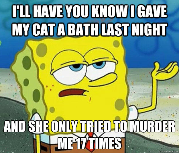I'll have you know i gave my cat a bath last night and she only tried to murder me 17 times - I'll have you know i gave my cat a bath last night and she only tried to murder me 17 times  Tough Spongebob