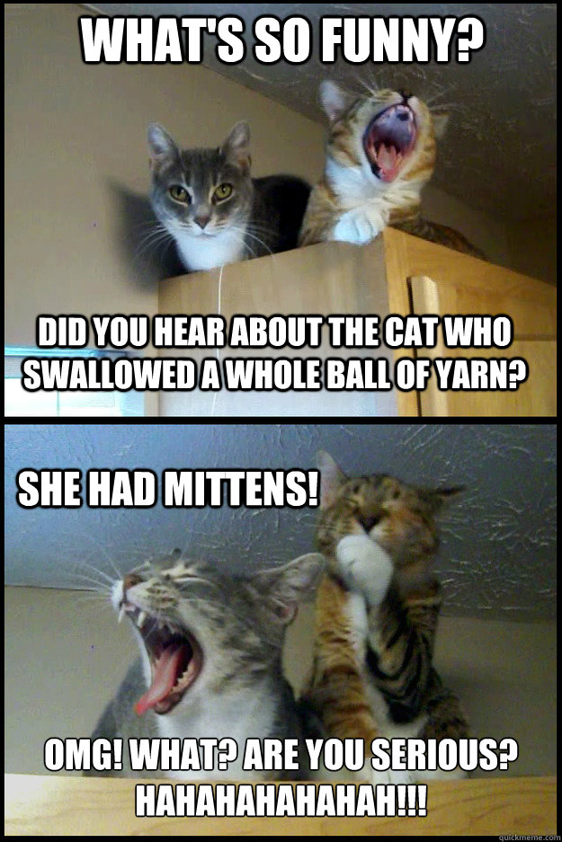 What's so funny? Did you hear about the cat who swallowed a whole ball of yarn? she had mittens! OMG! WHAT? ARE YOU SERIOUS? HAHAHAHAHAHAH!!!  Corny Pun Kittens