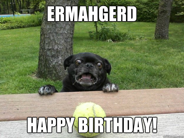 Ermahgerd Happy Birthday! - Ermahgerd Happy Birthday!  Berks Dog