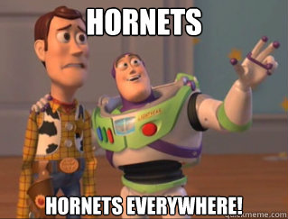 Hornets Hornets everywhere!