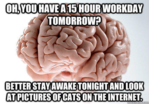 Oh, you have a 15 hour workday tomorrow? Better stay awake tonight and look at pictures of cats on the internet.  - Oh, you have a 15 hour workday tomorrow? Better stay awake tonight and look at pictures of cats on the internet.   Scumbag Brain