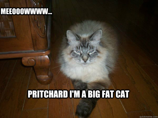 funny fat cat pics with captions