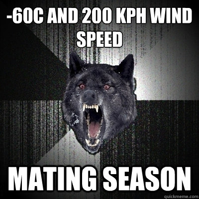 -60ºC and 200 kph wind speed mating season