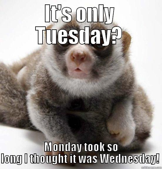 Funny Meme For Tuesday : Tuesday funny work quotes quotesgram