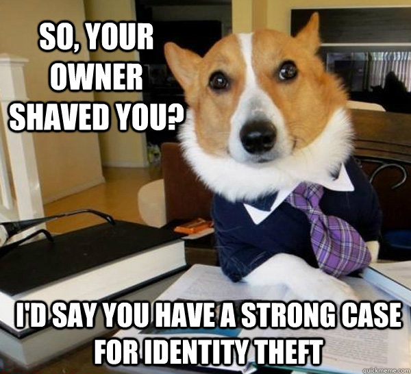 So, your owner shaved you? I'd say you have a strong case for identity theft  - So, your owner shaved you? I'd say you have a strong case for identity theft   Lawyer Dog