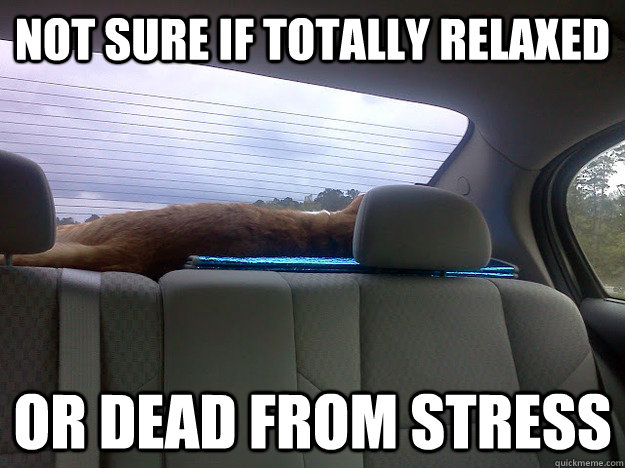 Not sure if totally relaxed Or dead from stress - Not sure if totally relaxed Or dead from stress  Travel Cat