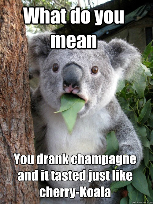 What do you mean You drank champagne and it tasted just like cherry-Koala - What do you mean You drank champagne and it tasted just like cherry-Koala  astonished koala