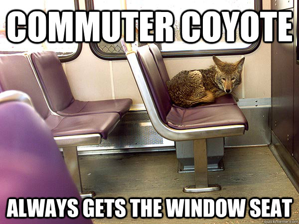 Commuter coyote  always gets the window seat - Commuter coyote  always gets the window seat  Misc