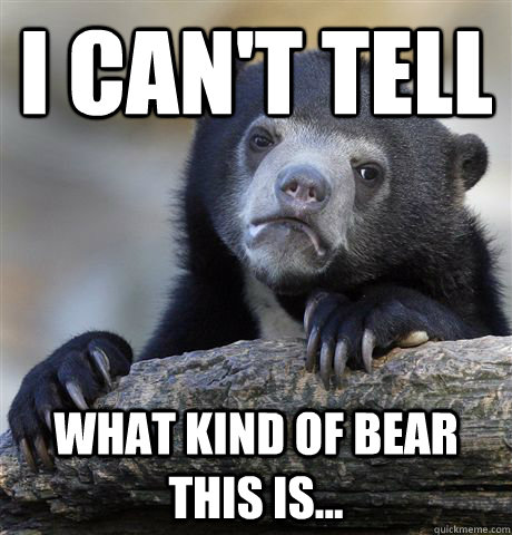 I can't tell what kind of bear this is... - I can't tell what kind of bear this is...  Confession Bear