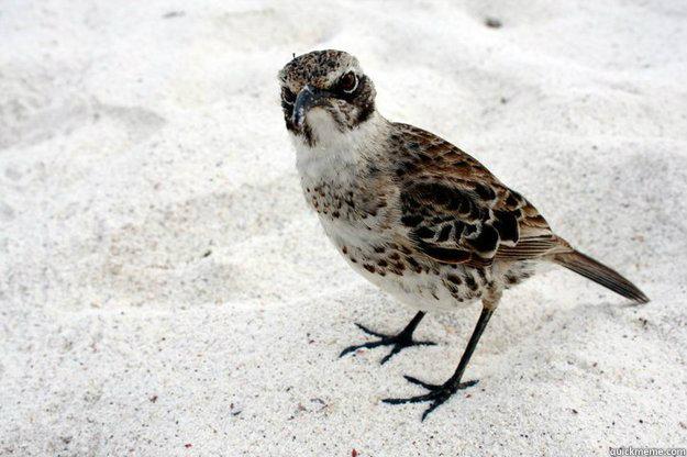 Untitled -   Curmudgeon Bird