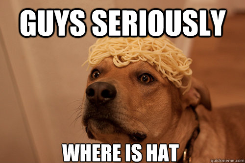 GUYS seriously where is hat - GUYS seriously where is hat  10 Dog
