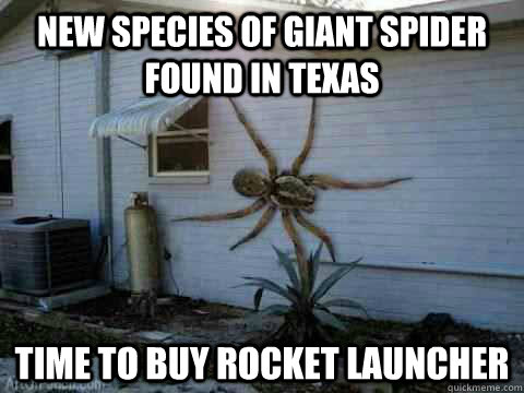 New Species of giant spider found in Texas Time to buy rocket launcher  - New Species of giant spider found in Texas Time to buy rocket launcher   giant spider