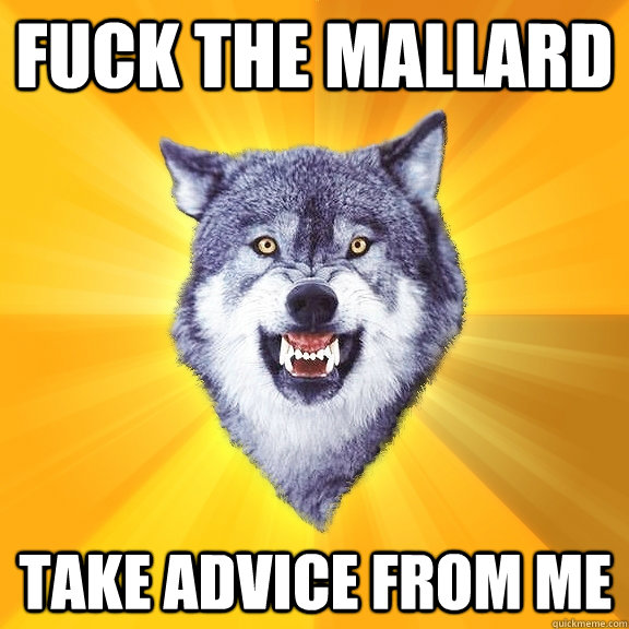 Fuck the mallard take advice from me - Fuck the mallard take advice from me  Courage Wolf