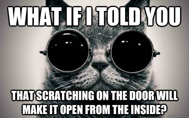 What if i told you that scratching on the door will make it open from the inside? - What if i told you that scratching on the door will make it open from the inside?  Morpheus Cat Facts