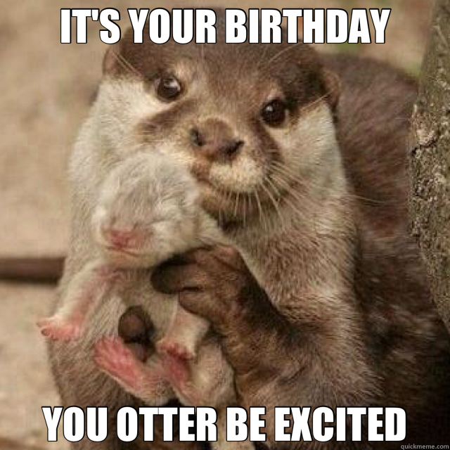 IT'S YOUR BIRTHDAY YOU OTTER BE EXCITED - IT'S YOUR BIRTHDAY YOU OTTER BE EXCITED  Misc