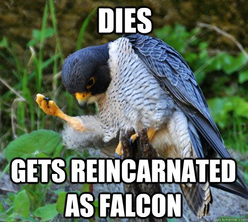 Dies Gets reincarnated as falcon