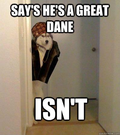 3580771f9d4c204b43cdc567374f4fede854307065625821705ccf8876febfa7 say's he's a great dane isn't scumbag dog quickmeme