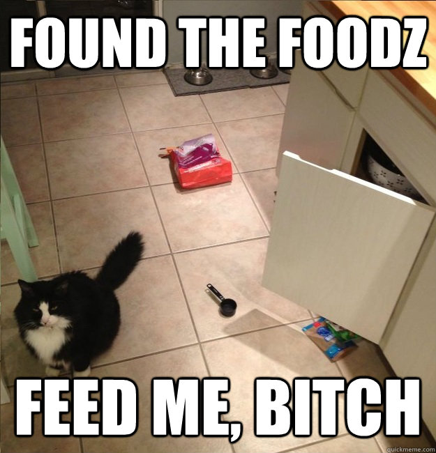 found the foodz feed me, bitch - found the foodz feed me, bitch  opposable thumbs cat