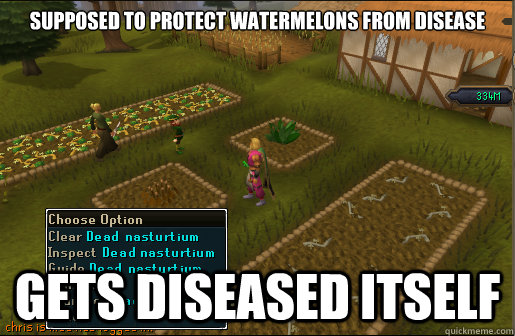 Supposed to protect watermelons from disease gets diseased itself - Supposed to protect watermelons from disease gets diseased itself  Scumbag Nasturtium