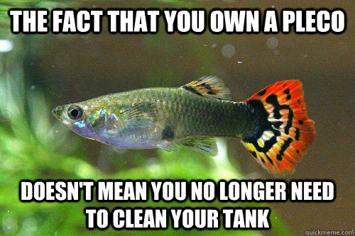The fact that you own a pleco Doesn't mean you no longer need to clean your tank