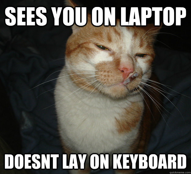 Sees you on laptop doesnt lay on keyboard