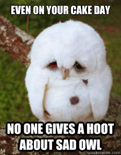 even on your cake day no one gives a hoot about sad owl - even on your cake day no one gives a hoot about sad owl  Sad Owl