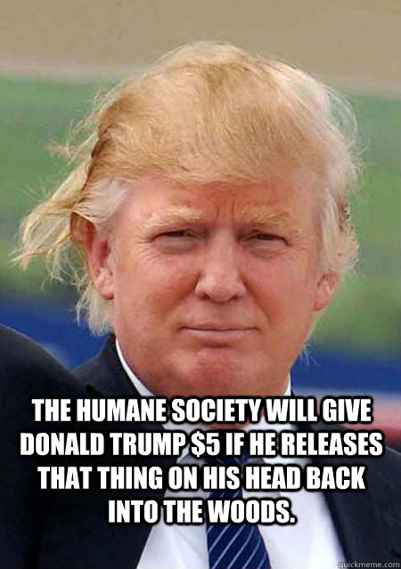 The Humane Society will give Donald Trump $5 if he releases that thing on his head back into the woods.